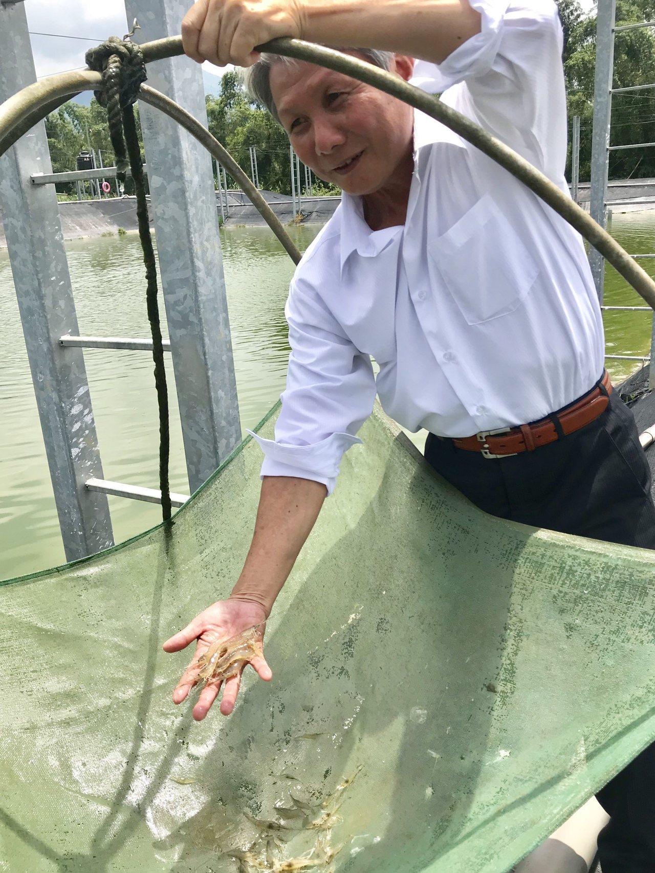 「蝦專家」屏科大水產系特聘教授鄭文騰,今年獲得「全國十大傑出農業專家」。記者江國...