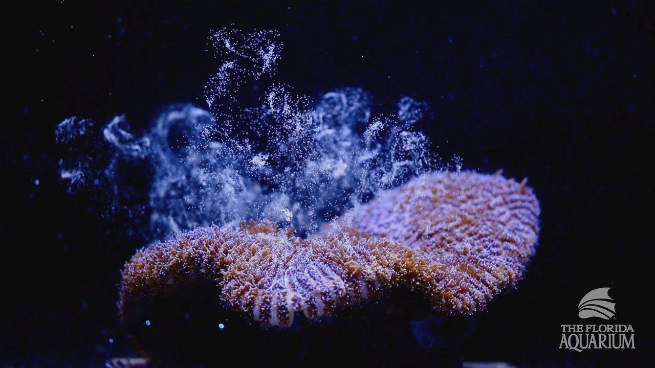 美国「佛罗里达水族馆」(Florida Aquarium)科学家成功利用英国研发...