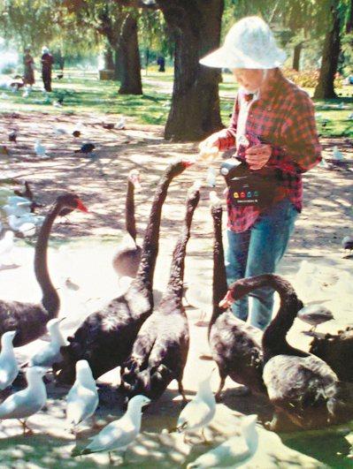 小孫女還是被這群伸著長長脖子,突如其來的黑天鵝嚇得嚎啕大哭。 圖╱余曉梅(南投市...