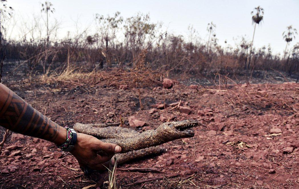 直到上個周末,亞馬遜依然有千餘起火災,陸續竄升。並且不只巴西,如玻利維亞等其他亞...