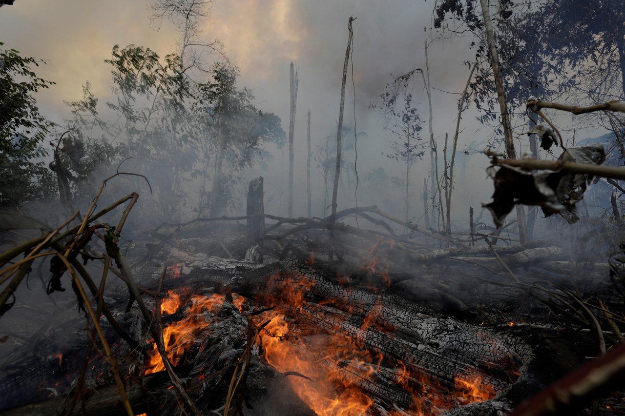 人為破壞可能將茂密的亞馬遜雨林轉變為長滿灌木和雜草的灌木叢,可能嚴重損害亞馬遜這...