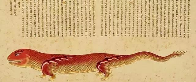 《海錯圖》中鱷魚形象。
