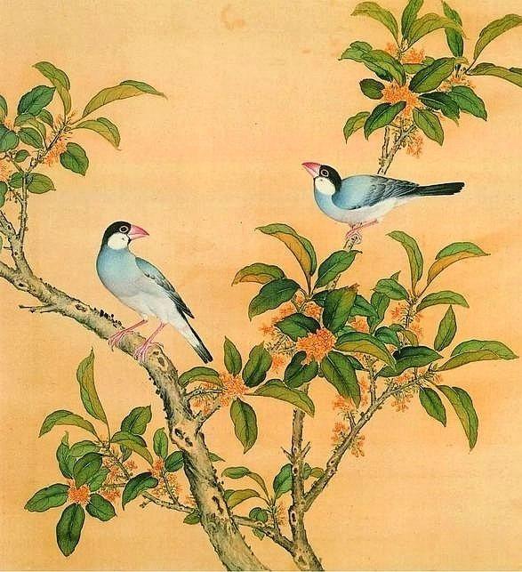 清.《鳥譜》。本圖片取自網路。