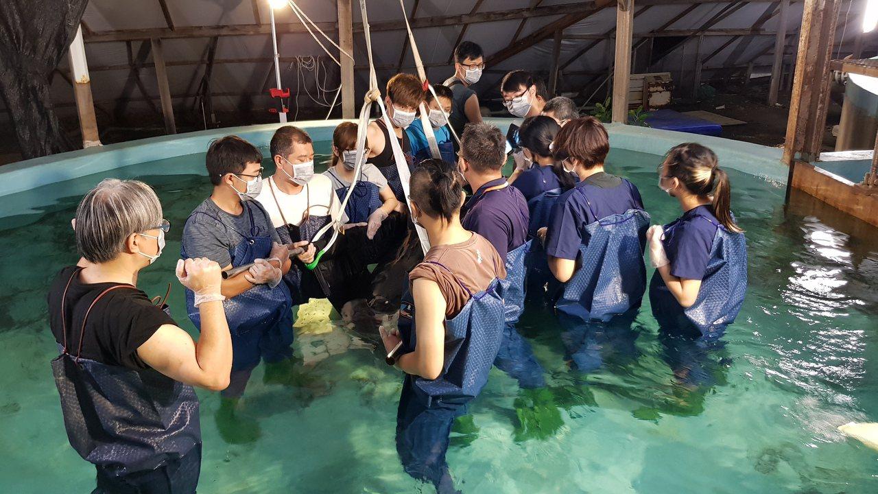 今年4月間擱淺在台南二仁溪出海口的領航鯨,成大鯨豚中心與志工努力救援。圖/成大提...