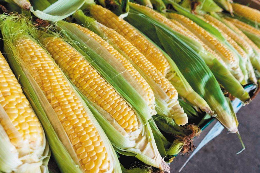 玉米。 圖/報系資料照