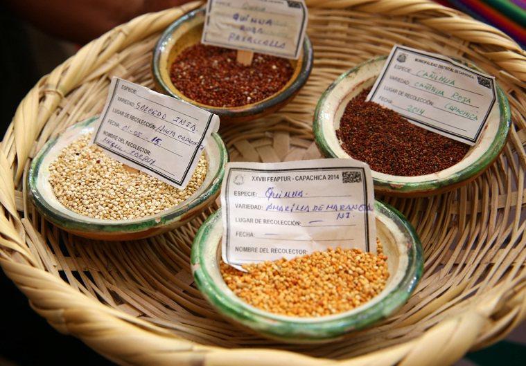 學者表示,藜麥營養價值的確遠高於白米,且熱量與升糖指數都比較低。不過,減重成果要...
