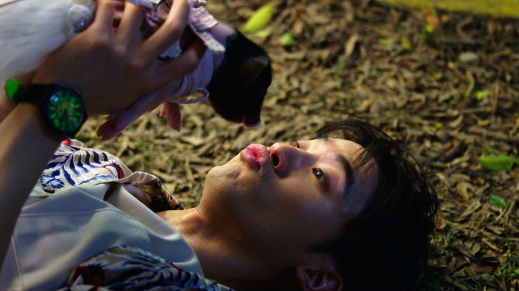 「小樂」吳思賢和豬接吻。圖/三立提供
