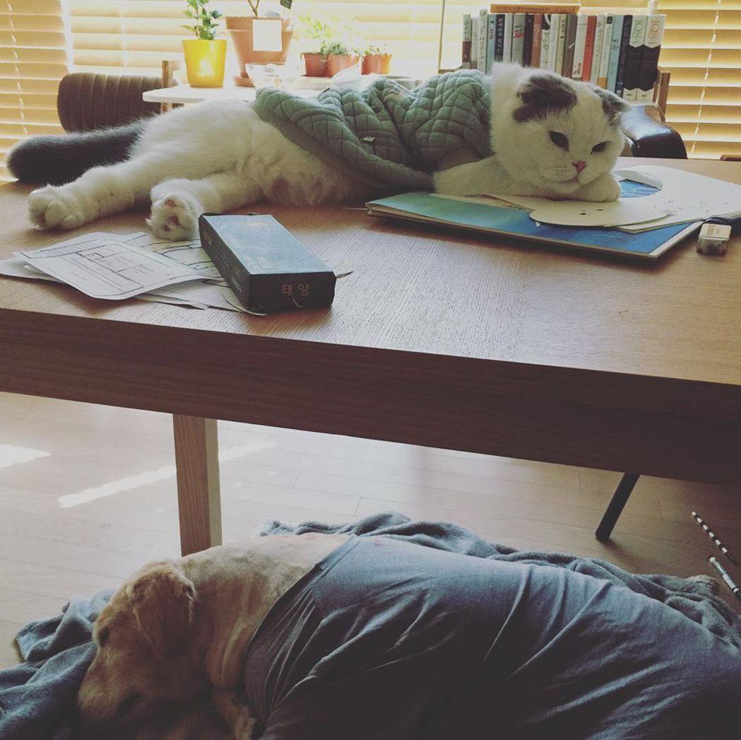具惠善貼出愛犬愛貓的照片。 圖/擷自具惠善IG