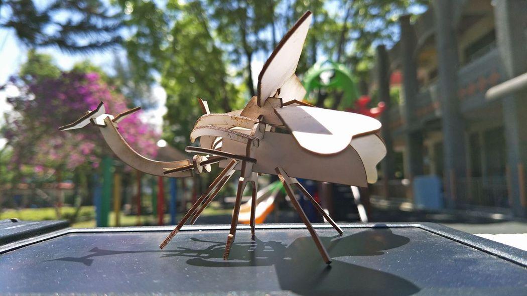 雷射切割對應自然科昆蟲模型(唐老師設計)