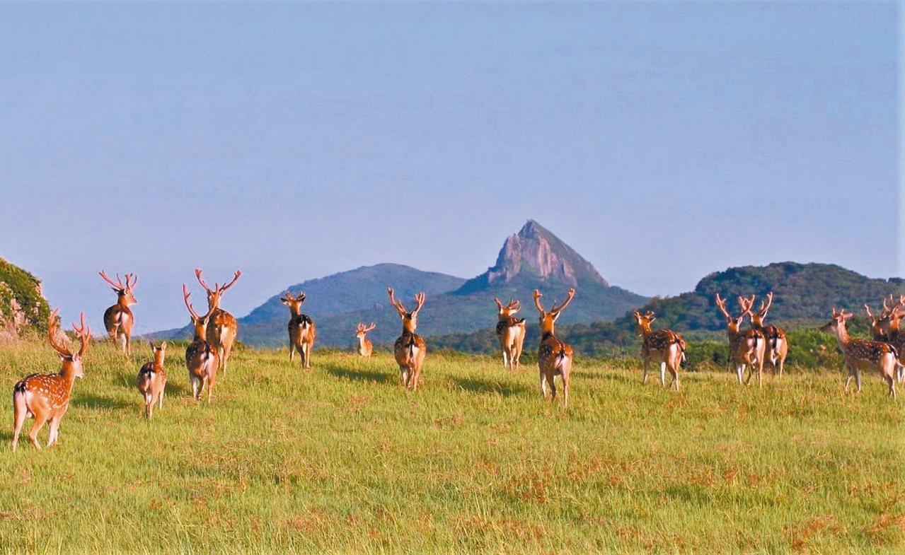 「逐鹿墾丁」將引領遊客了解台灣梅花鹿前世今生。 圖/墾管處提供