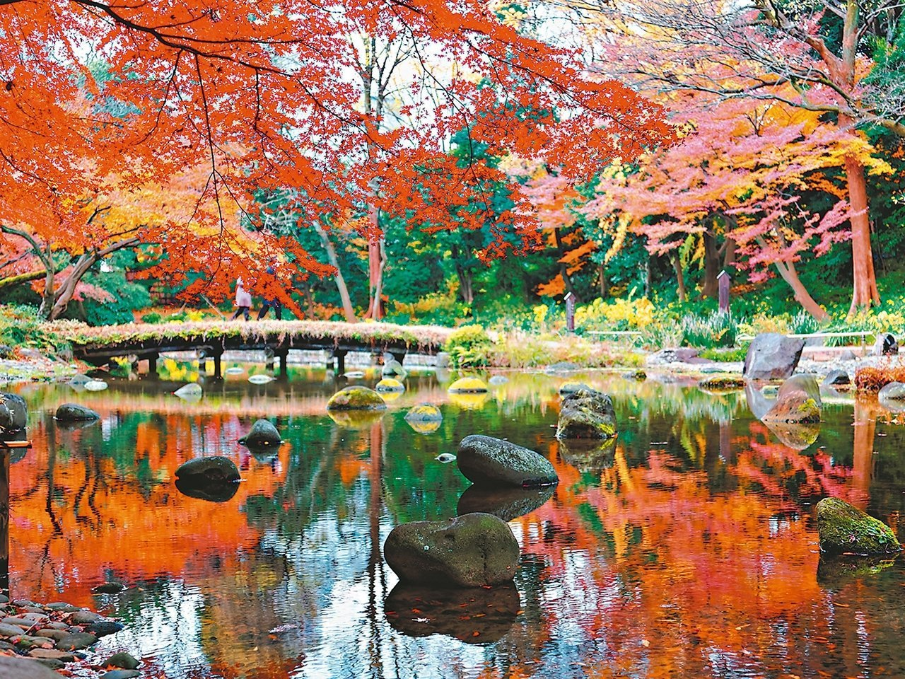 赴日賞楓是國人秋季最喜愛的主題旅遊。  圖/易遊網提供