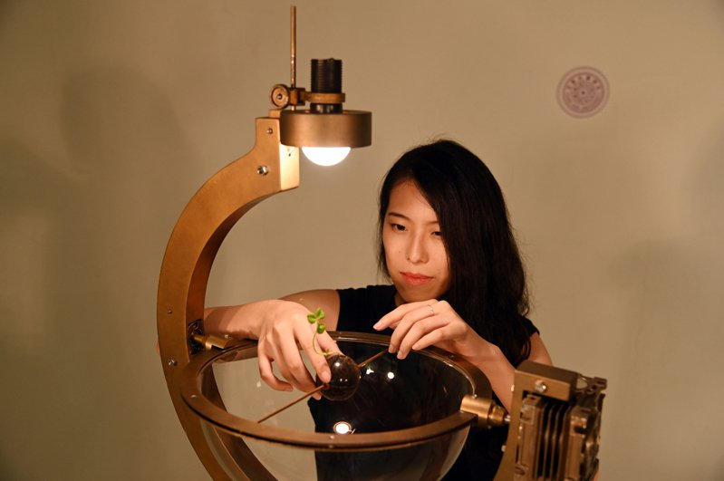 清華大學碩士生周巧其用電腦控制植物向光背地的角度,指揮豌豆生長路徑。圖/清大提供