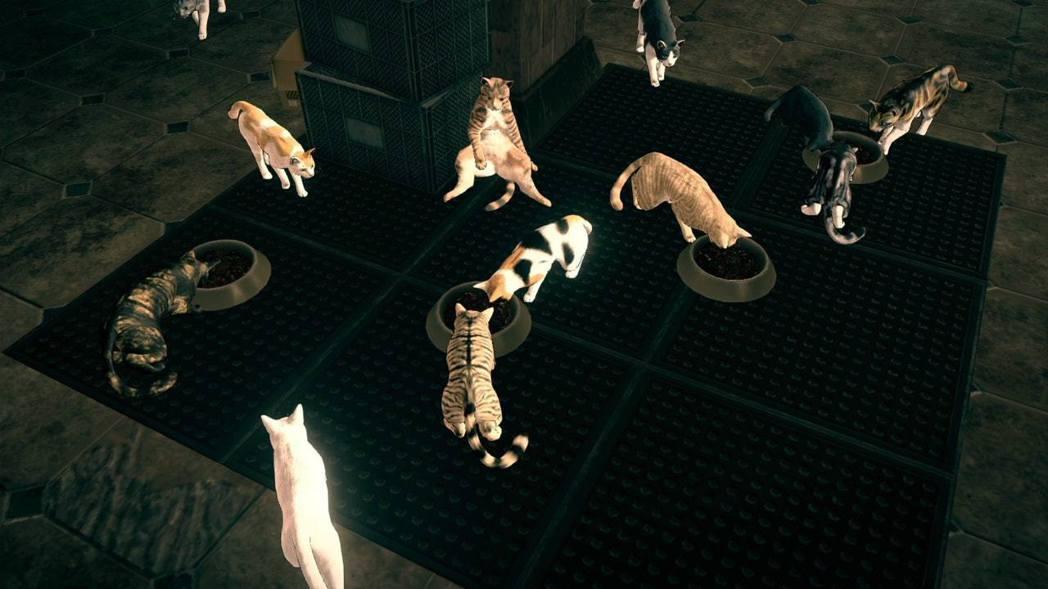 每關都有不同收集物,小貓是其中之一