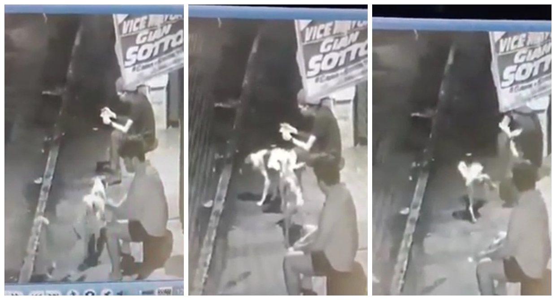 一名菲律賓青年玩手機太入迷,整個身體動也不動,被2隻狗當電線桿輪流小便,整個滑稽...