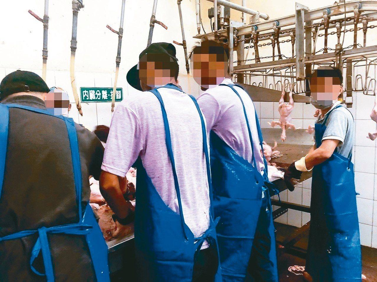康寧大學去年被爆出斯里蘭卡學生在台灣屠宰場打工。 圖/教團提供