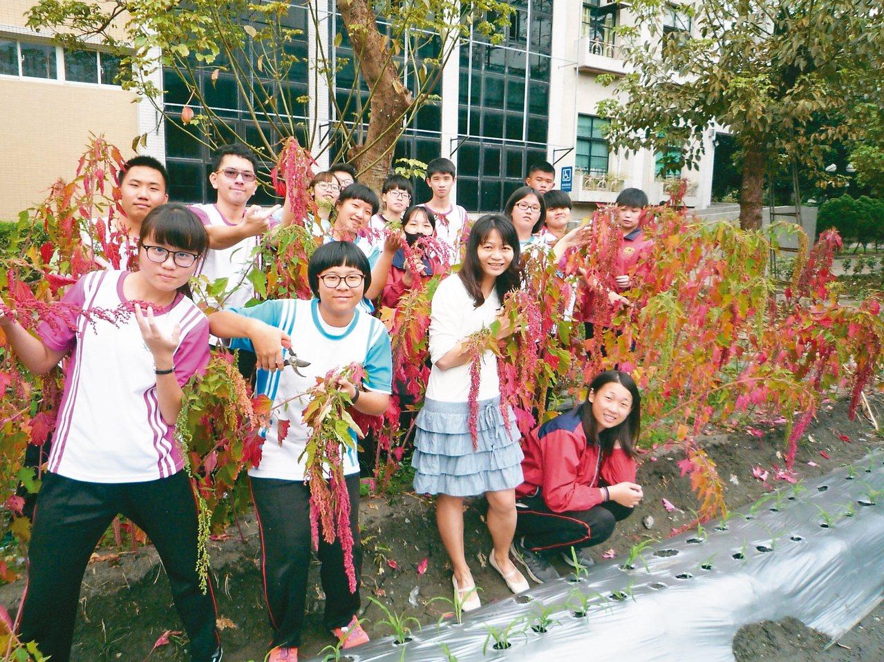 屏東縣內埔農工農經科學生栽培穀類紅寶石紅藜。 圖/教育部提供