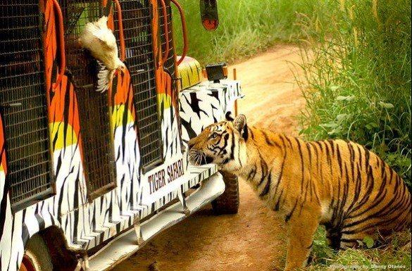 野生動物園。 圖/Flickr