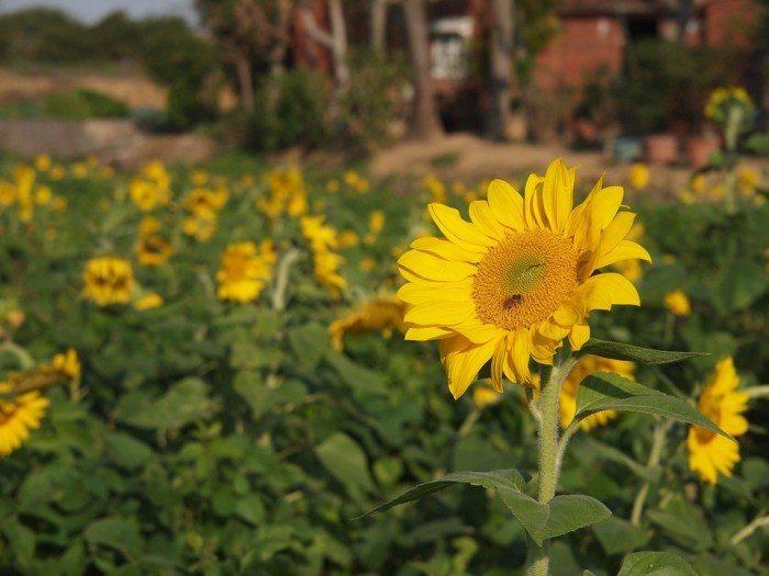 向陽農場。 圖/Pixabay