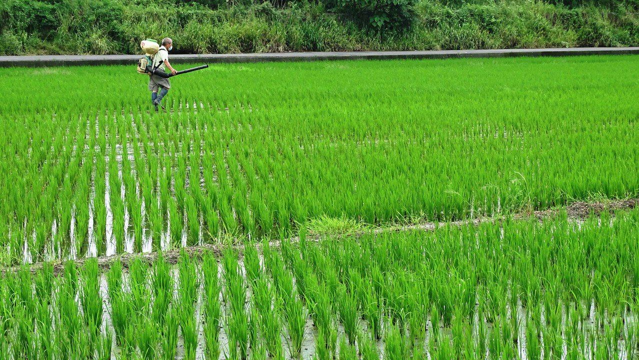 台灣農村人力老化,農業缺工嚴重,常見老農獨守農田流汗耕作。記者何烱榮/攝影