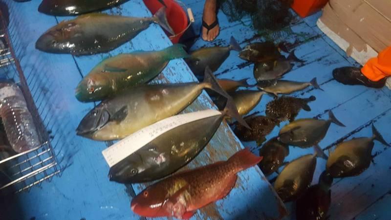 恆春海巡隊昨查獲1艘膠筏違法2人使用潛水裝備打魚,魚身皆有穿刺孔。記者潘欣中/翻攝