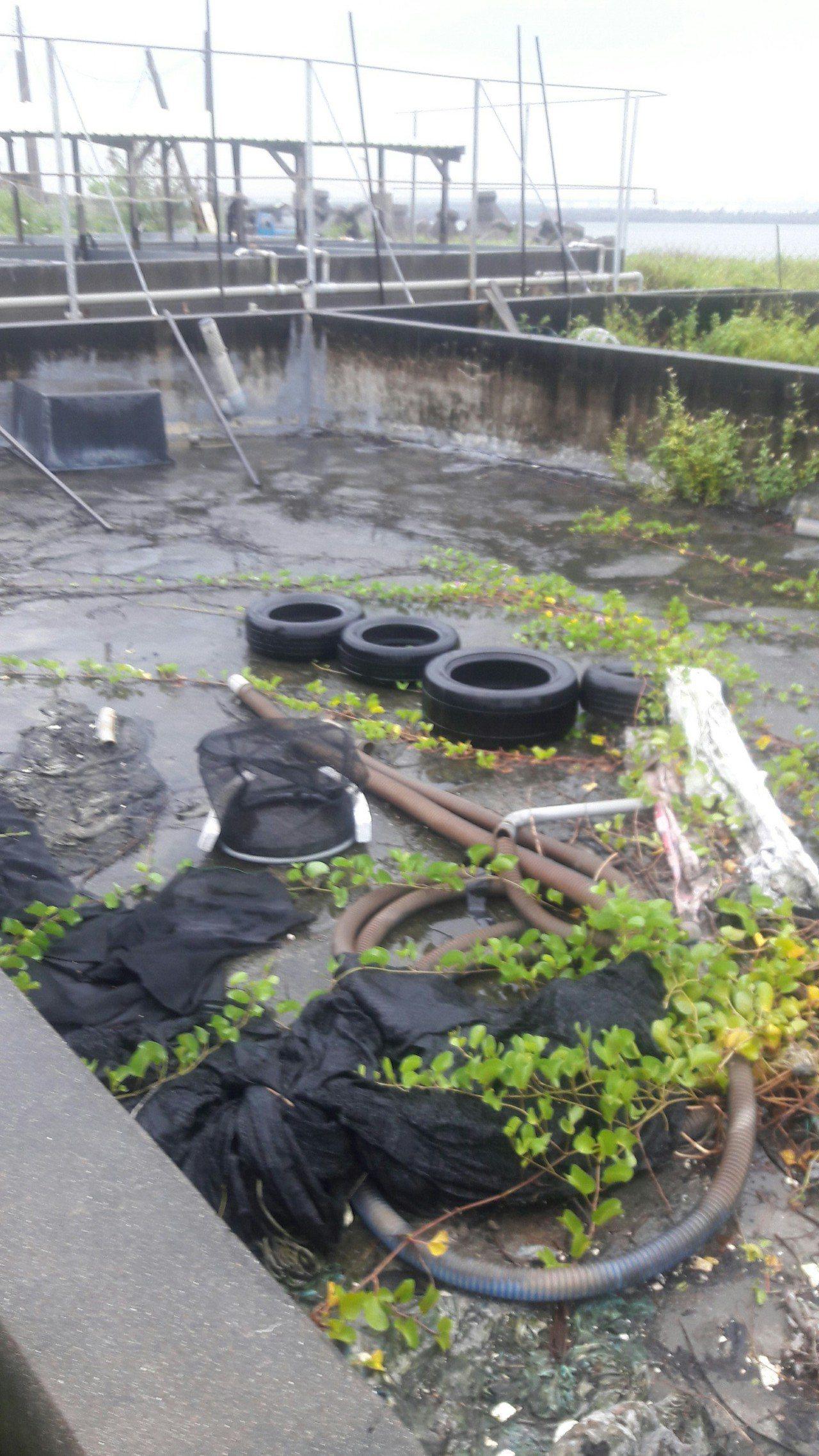 高雄市首見第一型本土登革熱群聚,防疫團隊在染病兄弟檔的鳳山住家附近,發現多處桶蓋...