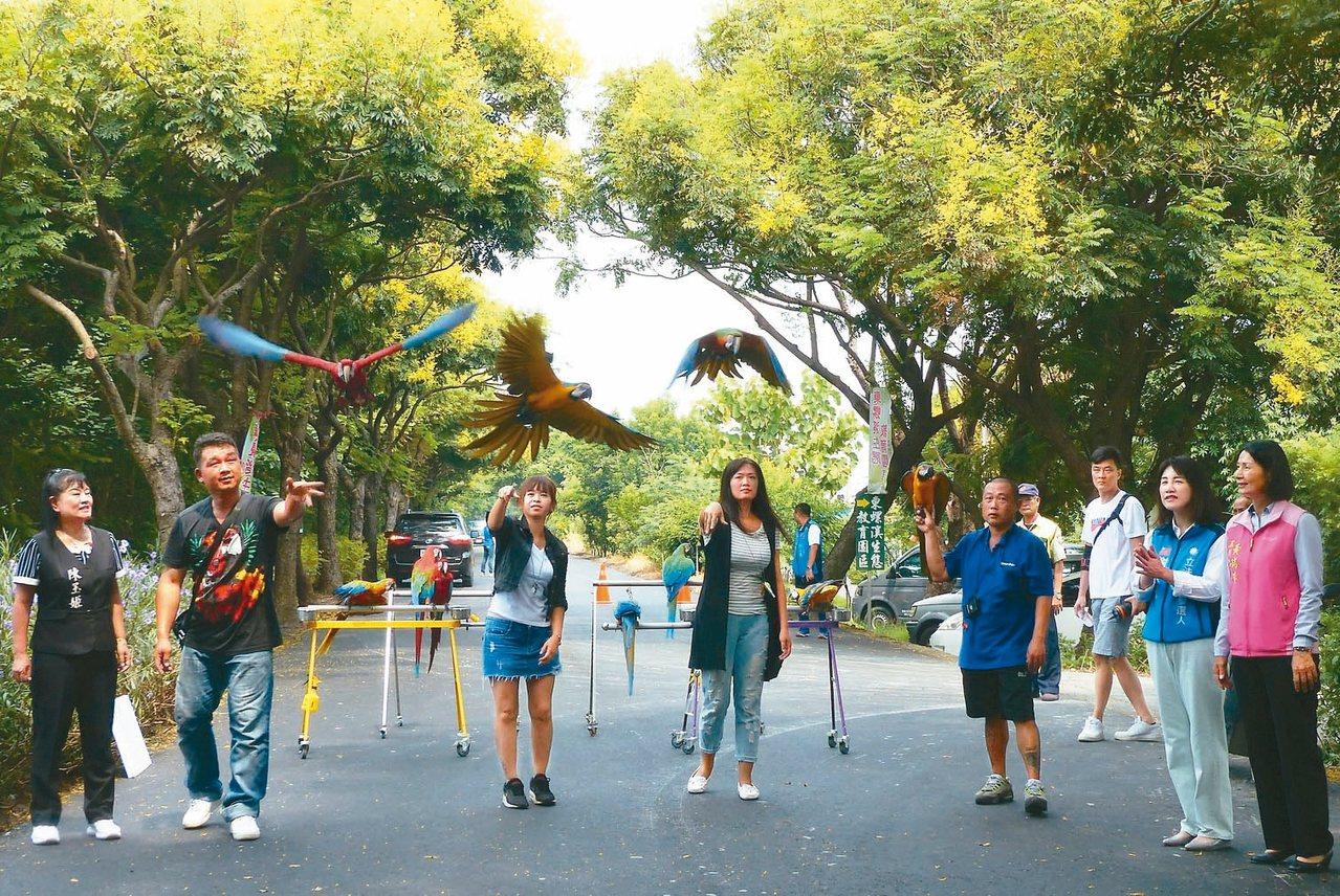 今年東螺溪戀戀欒樹節將有數十隻金剛鸚鵡到場,在東螺溪畔飛翔。 記者凌筠婷/攝影