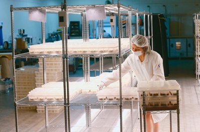 明谷農業生技的潔淨室培養區。