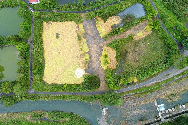 國民黨台南市黨部主委謝龍介指出,農委會收購文旦後,卻將約400萬斤文旦棄置在花蓮。圖/謝龍介提供