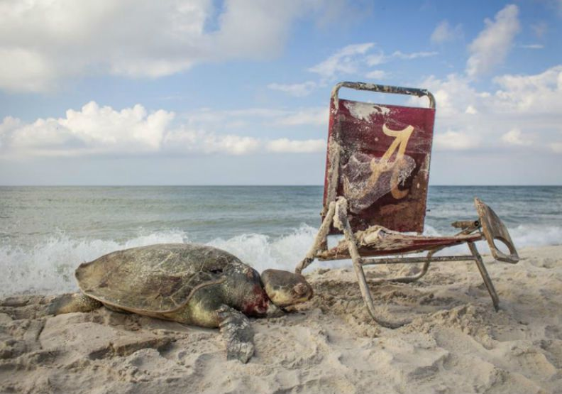 2019年「野生動物攝影師大賽」中,這張以海龜為主題的照片引發外界關注。圖/英國...