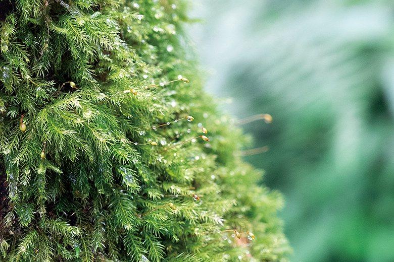 ▲樹幹上的苔蘚植物。龔安妮攝影