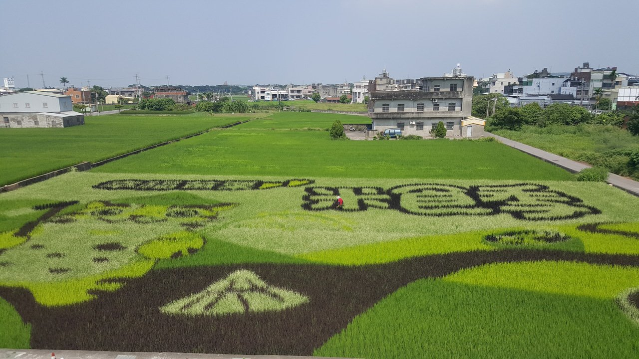 苑裡鎮農會著名的「稻田彩繪」,今年11月舉辦的「米食季」,吉祥物貓裏喵將化身戴斗...