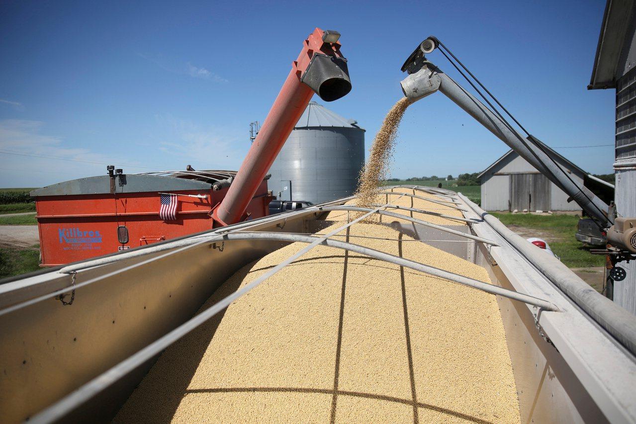 美國伊利諾州布達鎮(Buda)一處農場正在採收黃豆。 路透