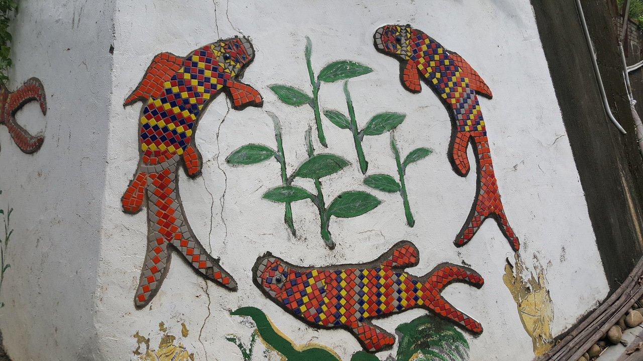 苗栗縣銅鑼鄉致力復育本土蓋斑鬥魚,以往社區牆面可見各式鬥魚的意象圖案,包括馬賽克...