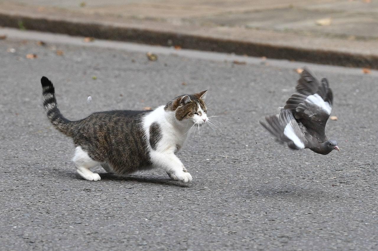 CIA曾經研究不同動物成為間諜的可能性,其中貓和鴿子都是實驗對象。 Getty ...