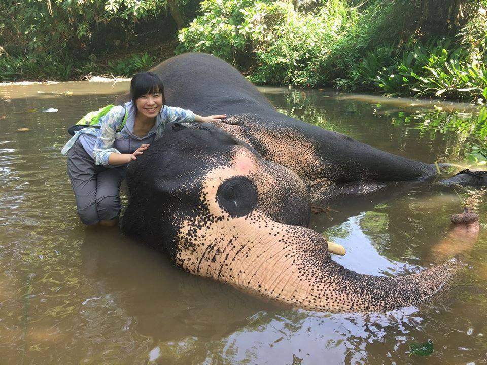 白心儀深入跟亞洲象接觸互動。圖/白心儀提供