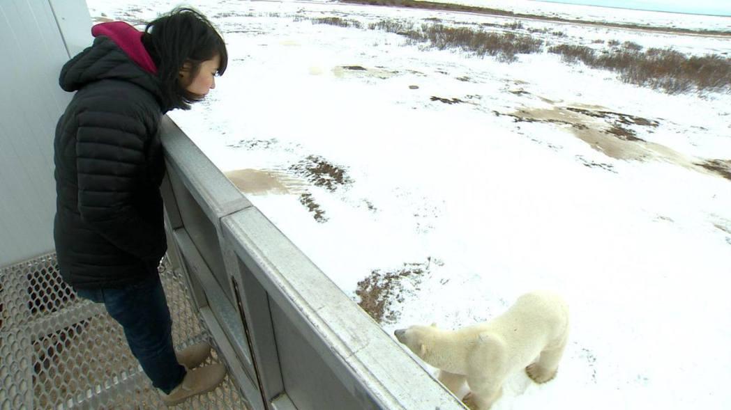 白心儀和北極熊面對面,近年地球暖化,北極熊常餓數月找不到食物。圖/白心儀提供