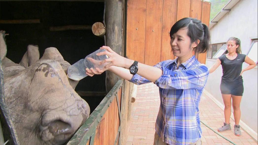 因為拍攝孤兒犀牛,白心儀興起做「地球的孤兒」系列報導的念頭。圖/白心儀提供