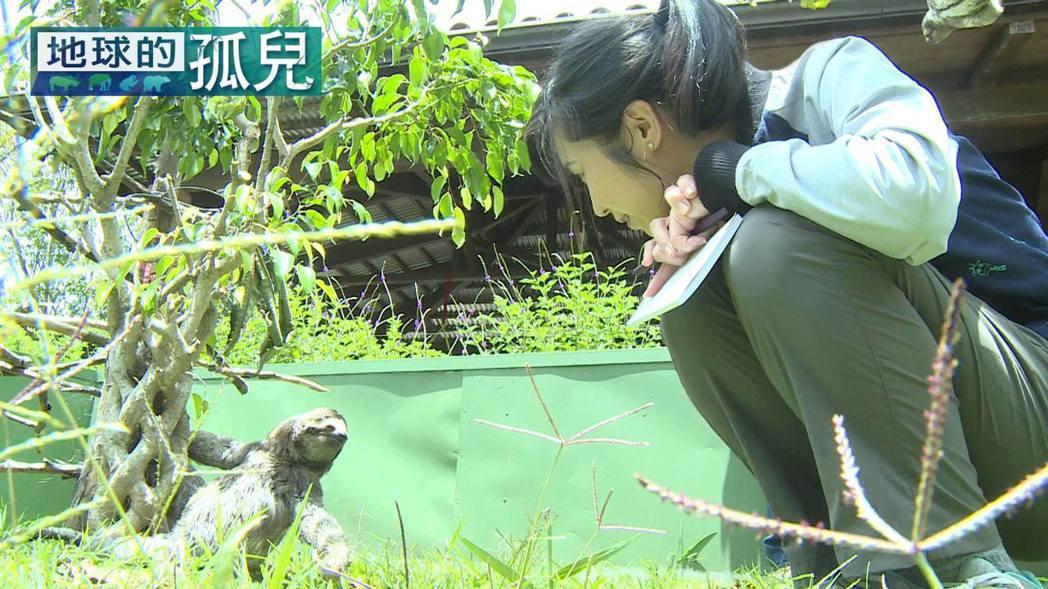 白心儀和樹懶近距離接觸。圖/白心儀提供