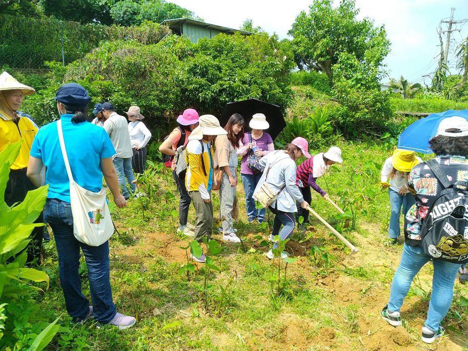旗山南勝社區與中寮山上的農夫們合作,推出「掘芋頭+學薑黃」農村體驗之旅,吸引許多都會遊客造訪。記者王昭月/翻攝