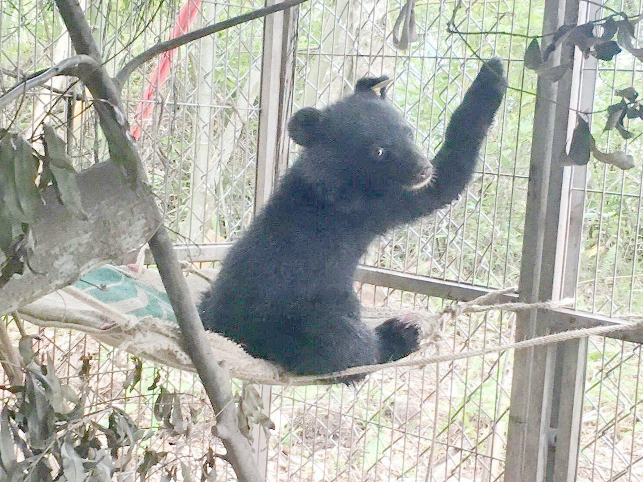 7月27日獲救的廣原小熊,經廣原村民取名布農族女性名字「姆拉斯」,有象徵堅忍不拔...