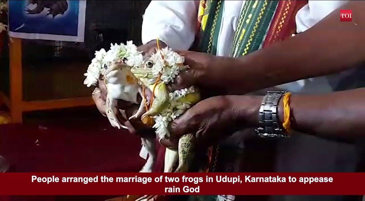 印度中部中央邦有一對為了求雨而結婚的青蛙夫妻,締結連理不到兩個月,就因當地暴雨成...