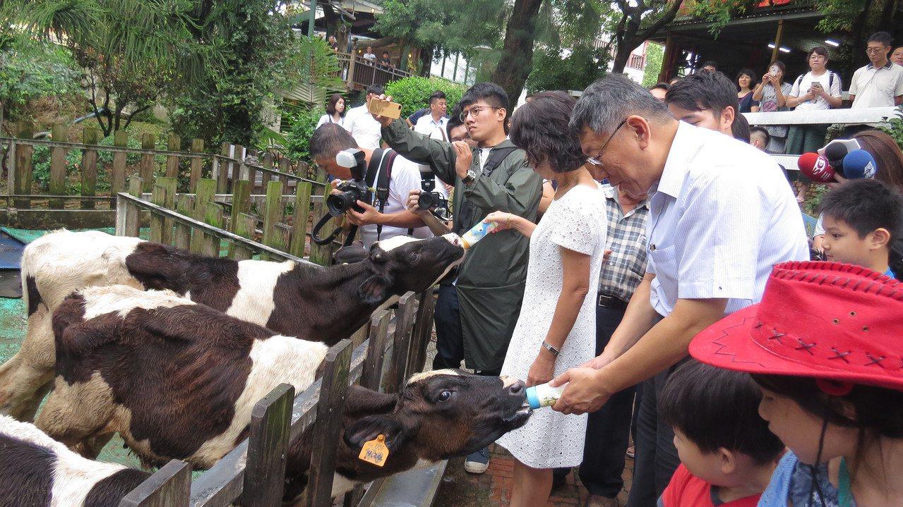 台北市長柯文哲、陳佩琪今天到苗栗縣竹南鎮四方牧場,並體驗餵小牛,陳佩琪完勝。記者...