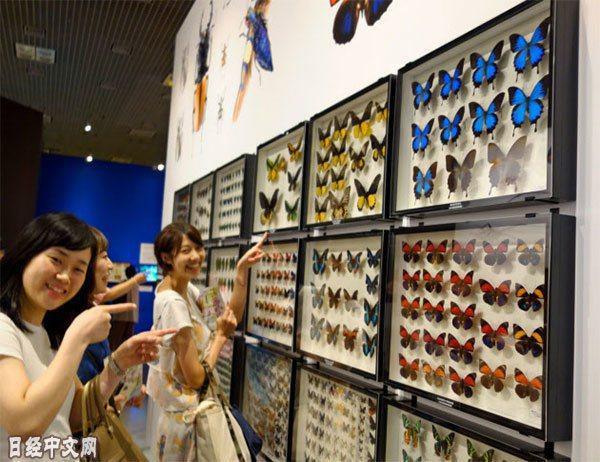 特別展《昆蟲》吸引了眾多女性參觀者(東京都上野的日本國立科學博物館) 取自日經中...