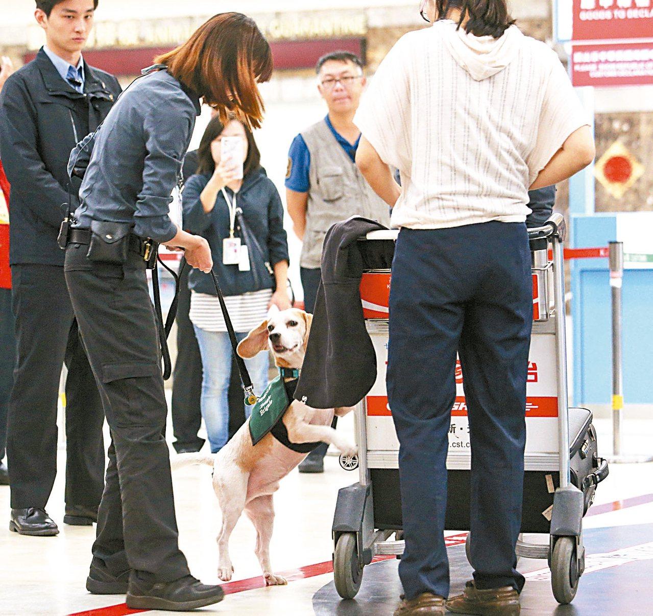 南韓驗出非洲豬瘟,今天下午1時起,旅客自南韓違規攜帶豬肉產品入境遭查獲,第一次...
