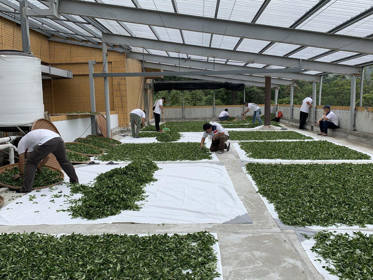 「2019年全國部分發酵茶製茶技術競賽」,共有40位來自全國各地製茶高手參加,年...