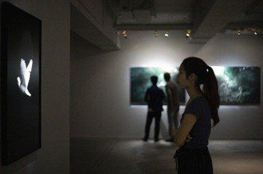 李娉婷/趙仁輝的偽科學創作——虛實之間,為外來種闢一片新森林