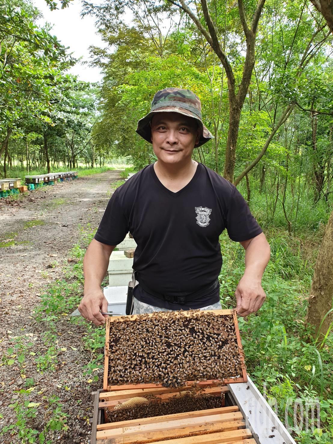 潮州農友陳柏升4年前從憲兵特勤部隊士官長退伍後,投入養蜂行列,從完全陌生到現在對...