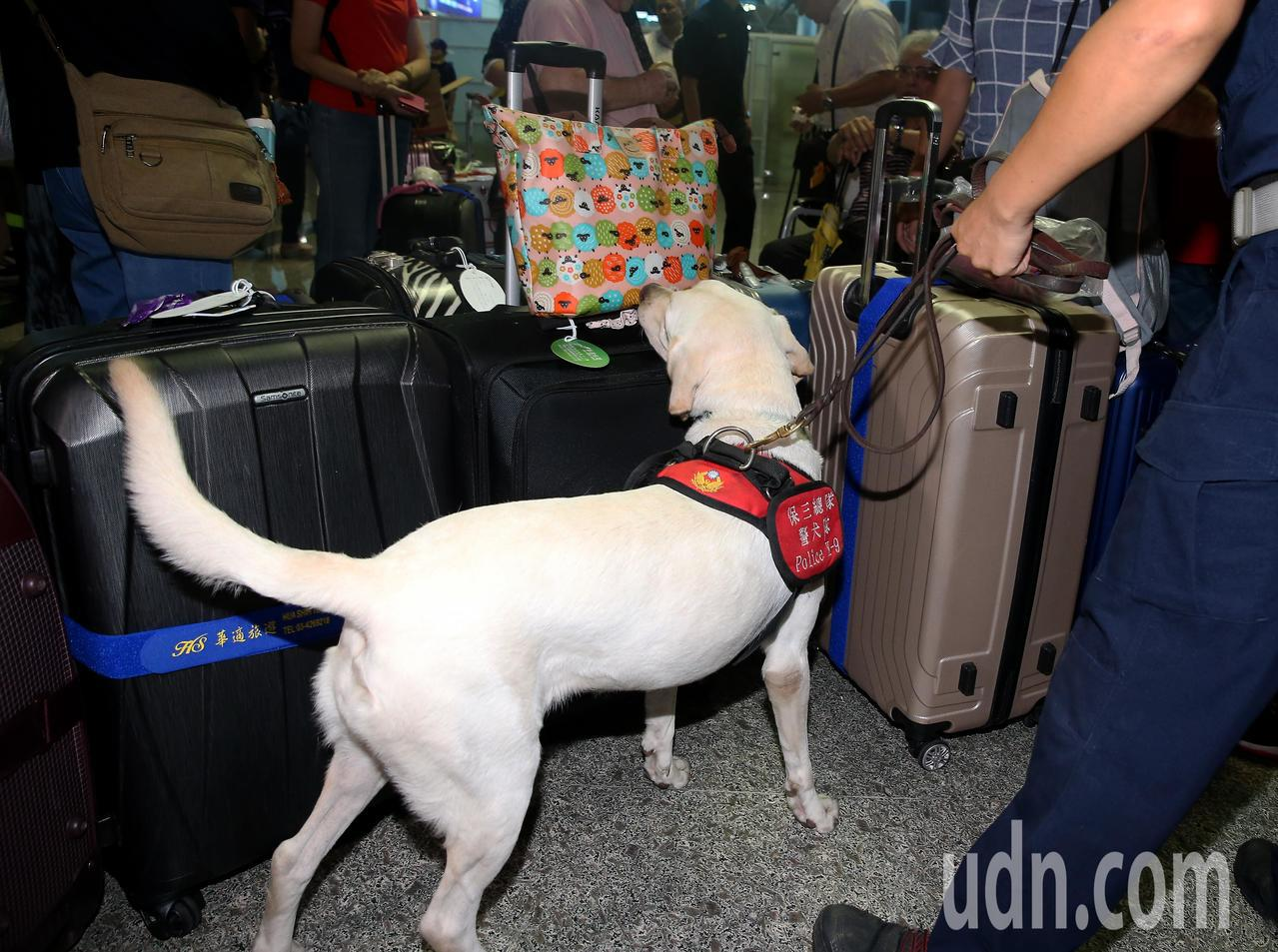近年出境旅客夾帶2級毒品案件有增加的趨勢,航空警察局為了截堵非法疏運毒品出境的犯...