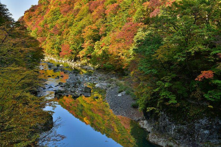 抱返溪谷的綠意與火紅的紅葉產生對比之美。圖/JR東日本提供