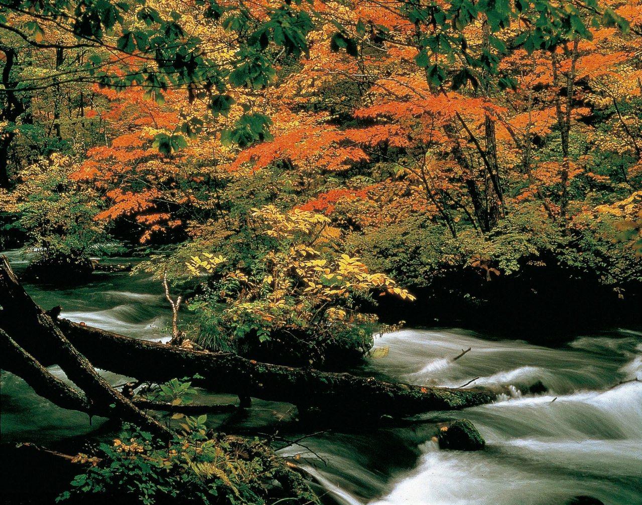 奥入瀬渓流乃是青森極具代表性的觀光景點。圖/JR東日本提供